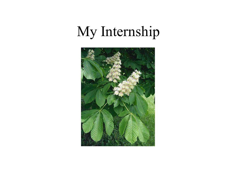 My Internship