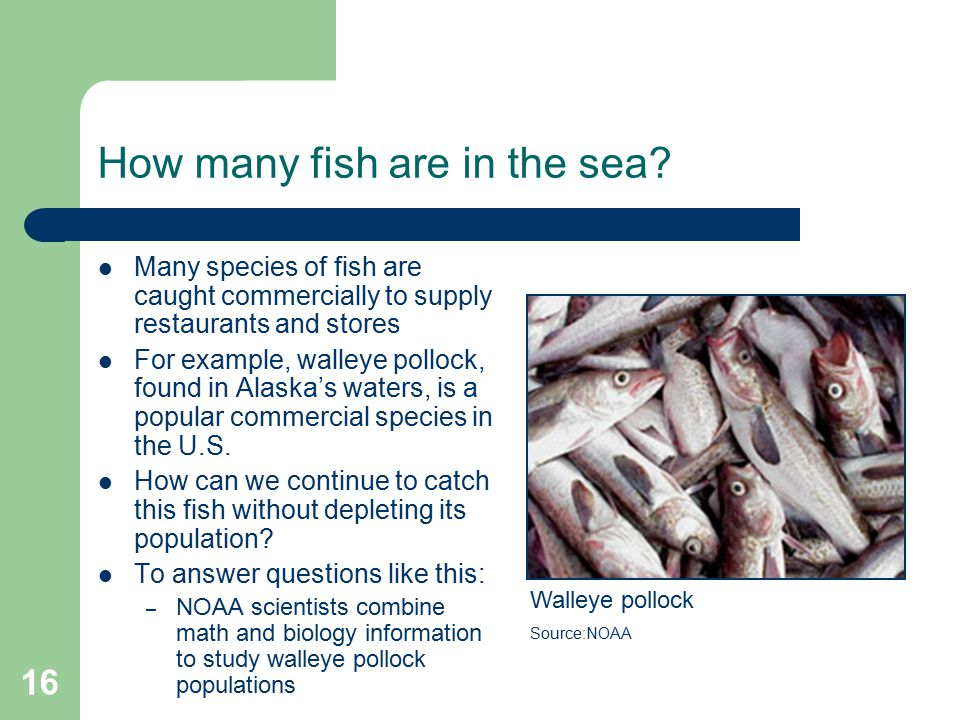How many fish are in the sea.