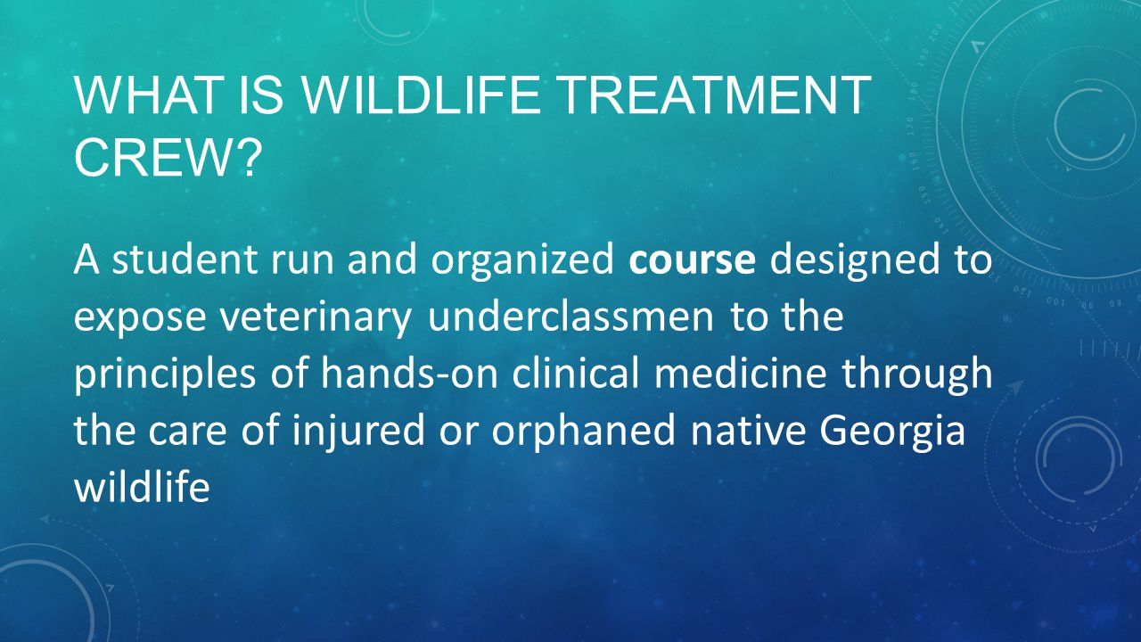 WHAT IS WILDLIFE TREATMENT CREW? A student run and organized course designed to expose veterinary underclassmen to the principles of hands-on clinical