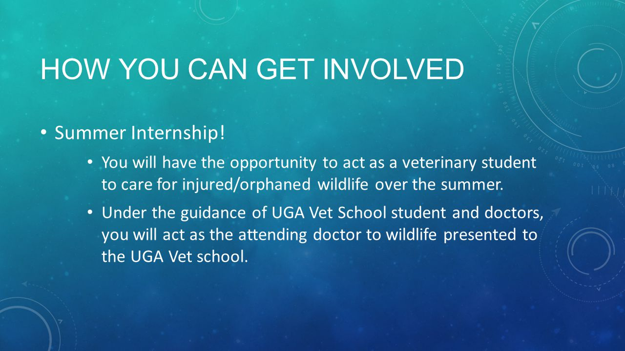 HOW YOU CAN GET INVOLVED Summer Internship! You will have the opportunity to act as a veterinary student to care for injured/orphaned wildlife over th