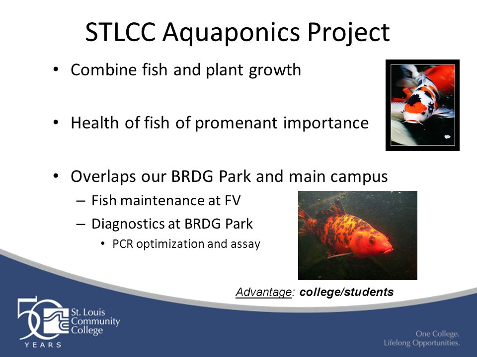 STLCC Aquaponics Project Combine fish and plant growth Health of fish of promenant importance Overlaps our BRDG Park and main campus – Fish maintenanc