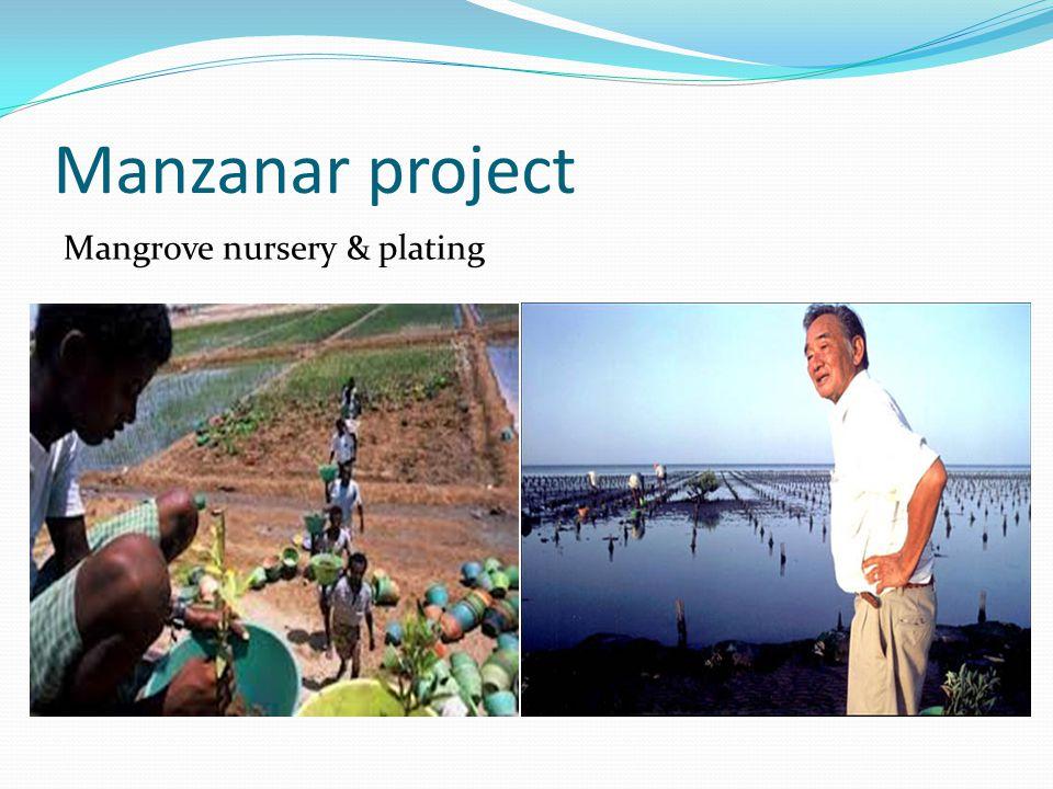 Manzanar project Mangrove nursery & plating