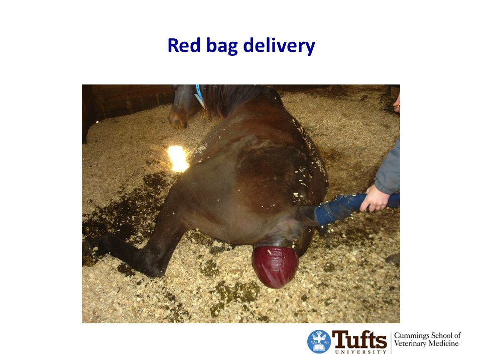Red bag delivery