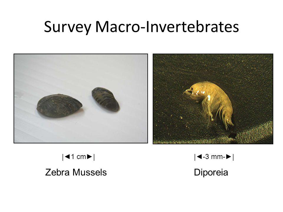 Survey Macro-Invertebrates Zebra MusselsDiporeia  ◄1 cm►  ◄-3 mm-► 