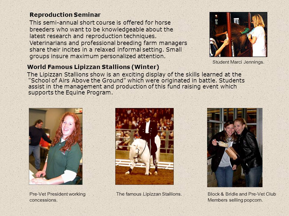 World Famous Lipizzan Stallions (Winter) The Lipizzan Stallions show is an exciting display of the skills learned at the School of Airs Above the Ground which were originated in battle.