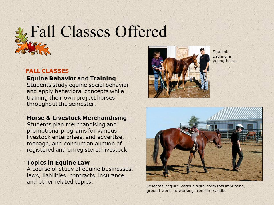 Fall Classes Offered FALL CLASSES Equine Behavior and Training Students study equine social behavior and apply behavioral concepts while training their own project horses throughout the semester.