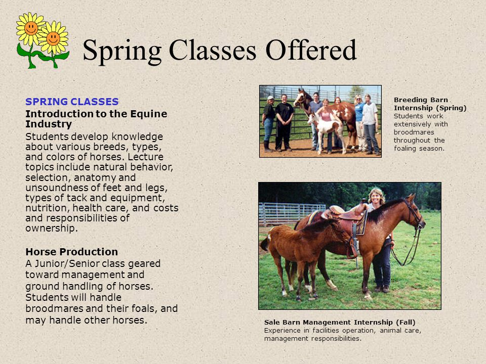 SPRING CLASSES Introduction to the Equine Industry Students develop knowledge about various breeds, types, and colors of horses.