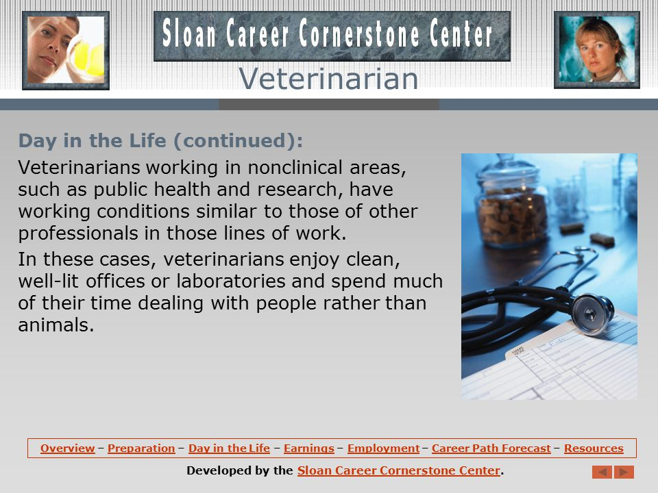 Day in the Life: Veterinarians often work long hours.