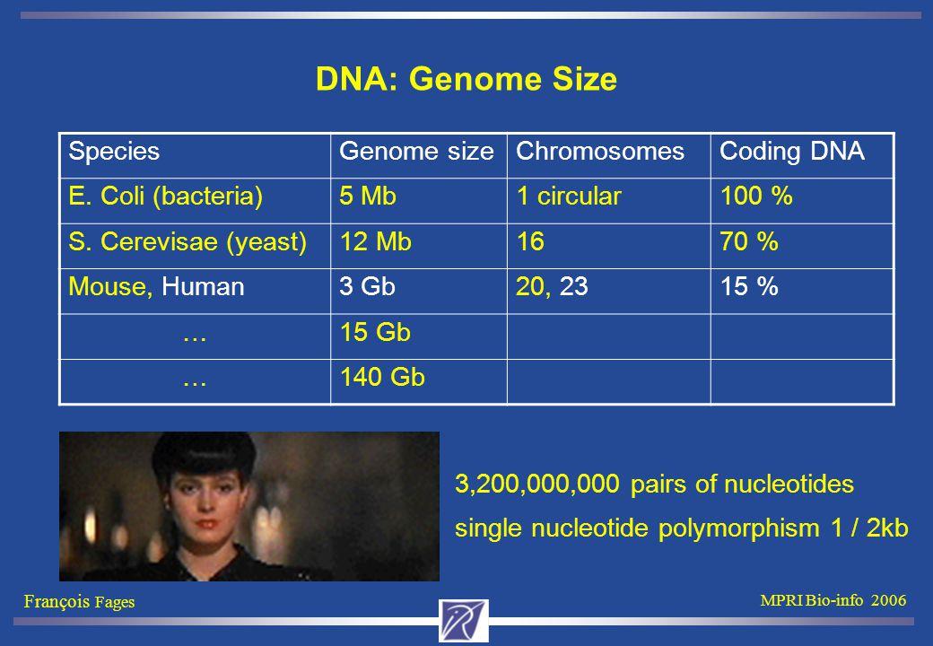 François Fages MPRI Bio-info 2006 DNA: Genome Size SpeciesGenome sizeChromosomesCoding DNA E.