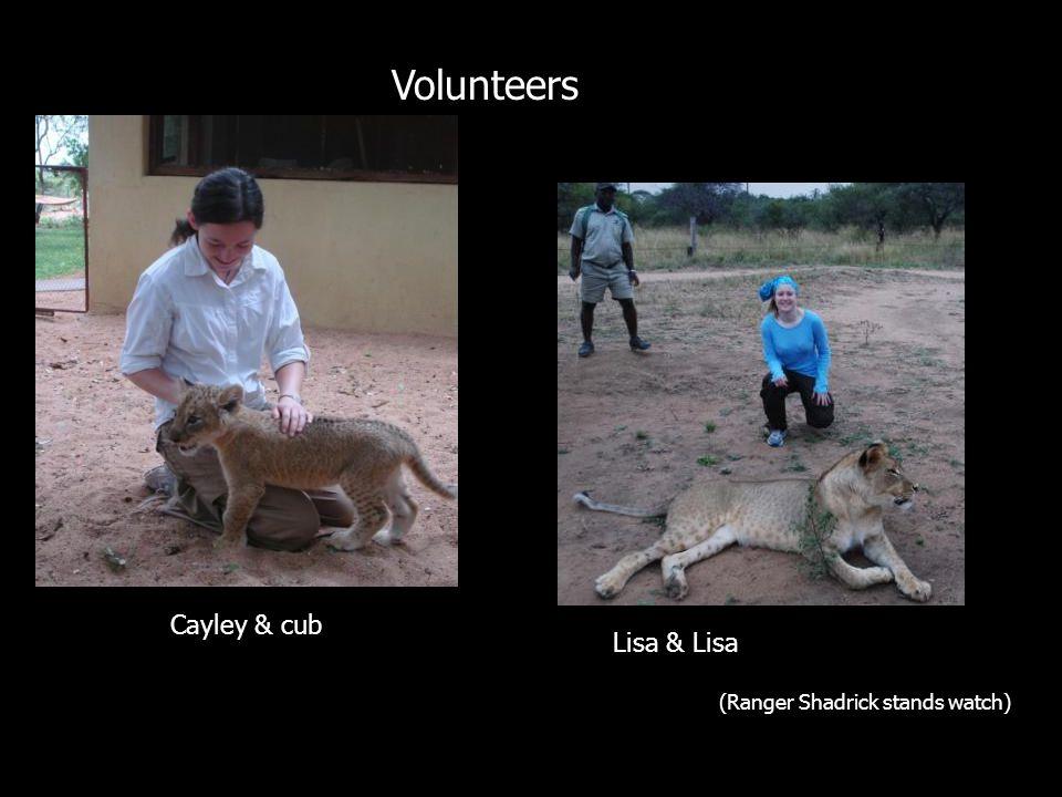 Safari Cayley & cub Lisa & Lisa (Ranger Shadrick stands watch) Volunteers