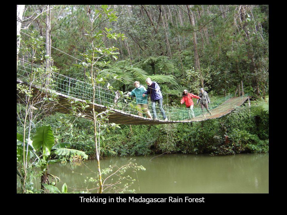 Trekking in the Madagascar Rain Forest