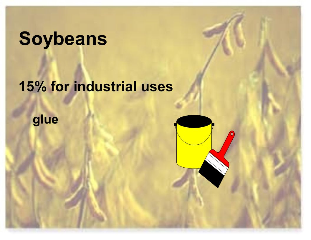 Soybeans 15% for industrial uses glue