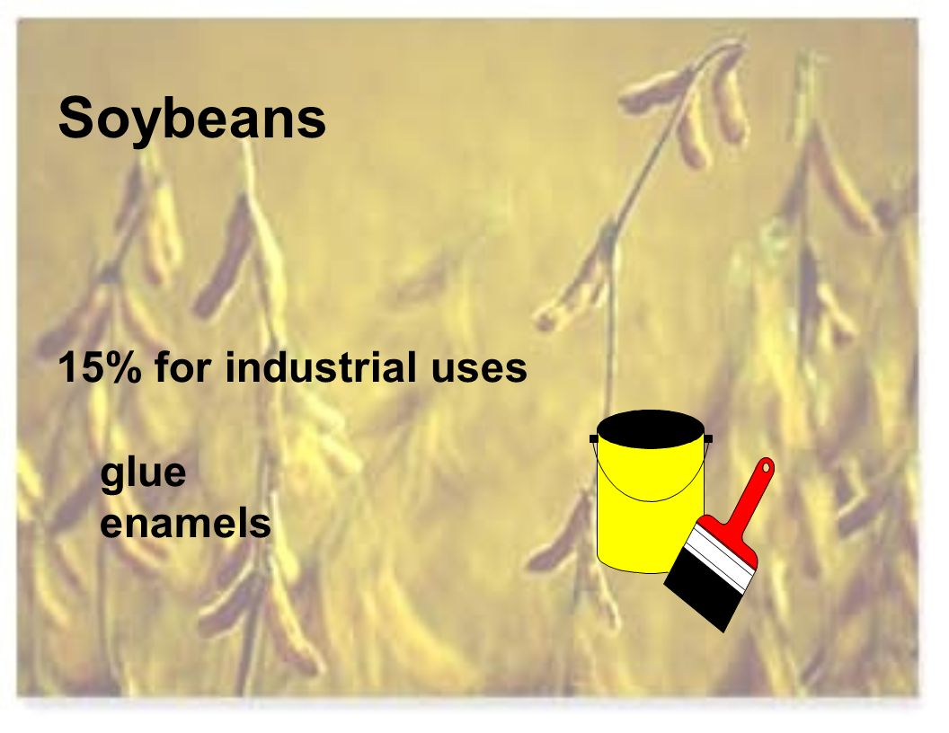 Soybeans 15% for industrial uses glue enamels
