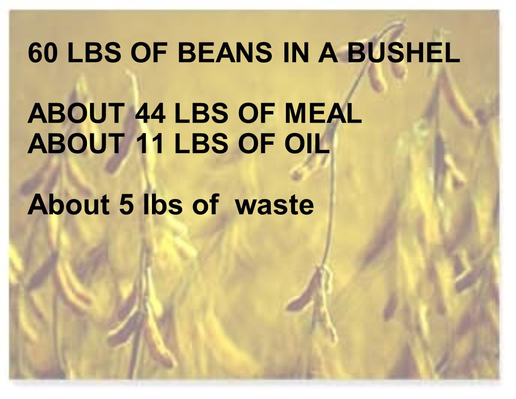 60 LBS OF BEANS IN A BUSHEL ABOUT 44 LBS OF MEAL ABOUT 11 LBS OF OIL About 5 lbs of waste