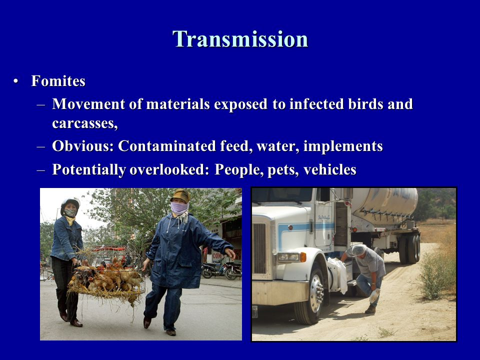 5 FomitesFomites –Movement of materials exposed to infected birds and carcasses, –Obvious: Contaminated feed, water, implements –Potentially overlooked: People, pets, vehicles Transmission