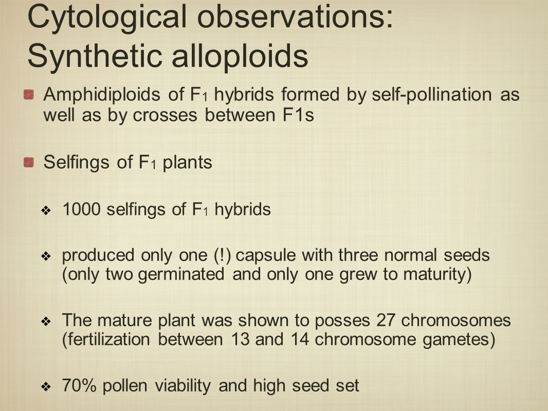 Cytological observations: Synthetic alloploids Amphidiploids of F 1 hybrids formed by self-pollination as well as by crosses between F1s Selfings of F 1 plants 1000 selfings of F 1 hybrids produced only one (!) capsule with three normal seeds (only two germinated and only one grew to maturity) The mature plant was shown to posses 27 chromosomes (fertilization between 13 and 14 chromosome gametes) 70% pollen viability and high seed set