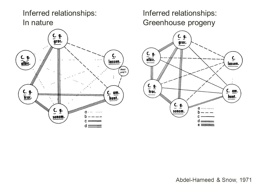 Abdel-Hameed & Snow, 1971 Inferred relationships: In nature Inferred relationships: Greenhouse progeny