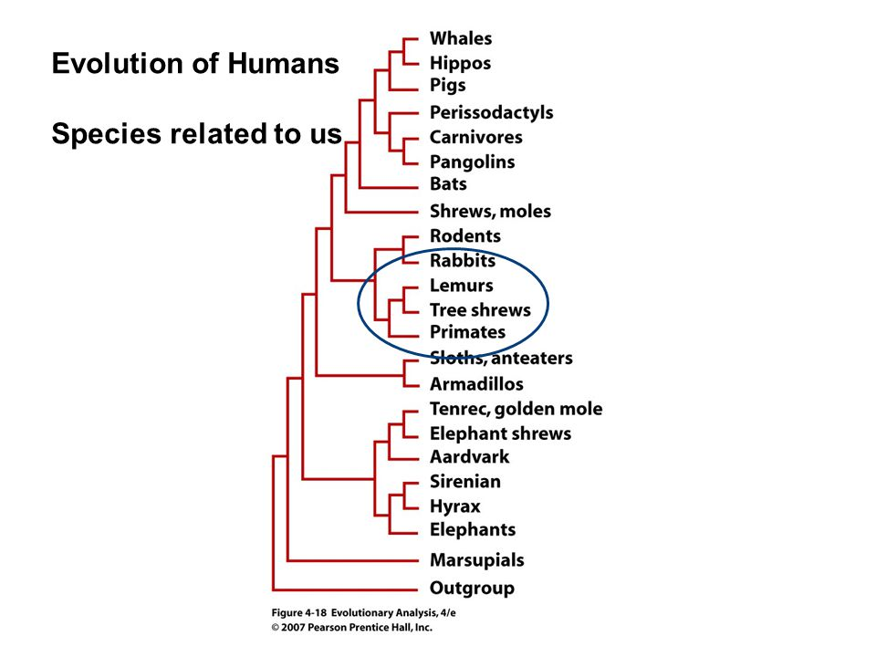 Homoplasy: A trait that is similar between two species because of convergent evolution, parallelism or reversal, but not because of shared ancestry Convergent evolution: Similarity between species that is caused by a similar but evolutionarily independent response to similar selection pressures (great evidence for an adaptation).