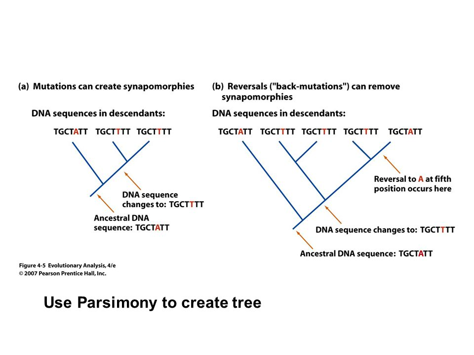 Use Parsimony to create tree