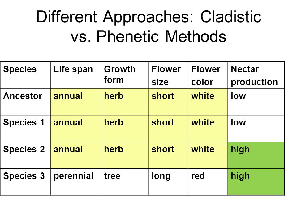 Ancestor: Annual, herb, short and white flowers with low nectar production Synapomorphies: Traits that are shared and derived and reveal evolutionary branch point High nectar Sp 1 2 3 1 2 3 Phenetic (overall similarity) Cladistic (shared and derived)
