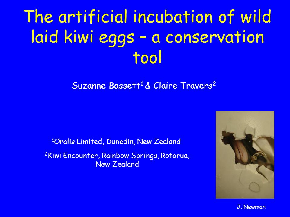 The artificial incubation of wild laid kiwi eggs – a conservation tool Suzanne Bassett 1 & Claire Travers 2 2 Kiwi Encounter, Rainbow Springs, Rotorua, New Zealand 1 Oralis Limited, Dunedin, New Zealand J.