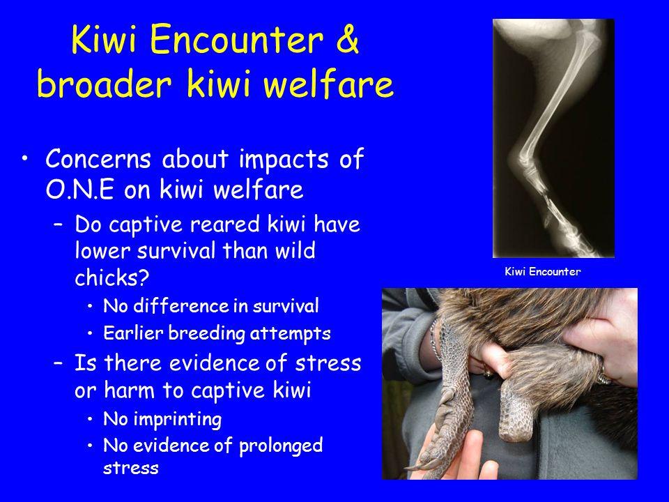 Kiwi Encounter & broader kiwi welfare Concerns about impacts of O.N.E on kiwi welfare –Do captive reared kiwi have lower survival than wild chicks.