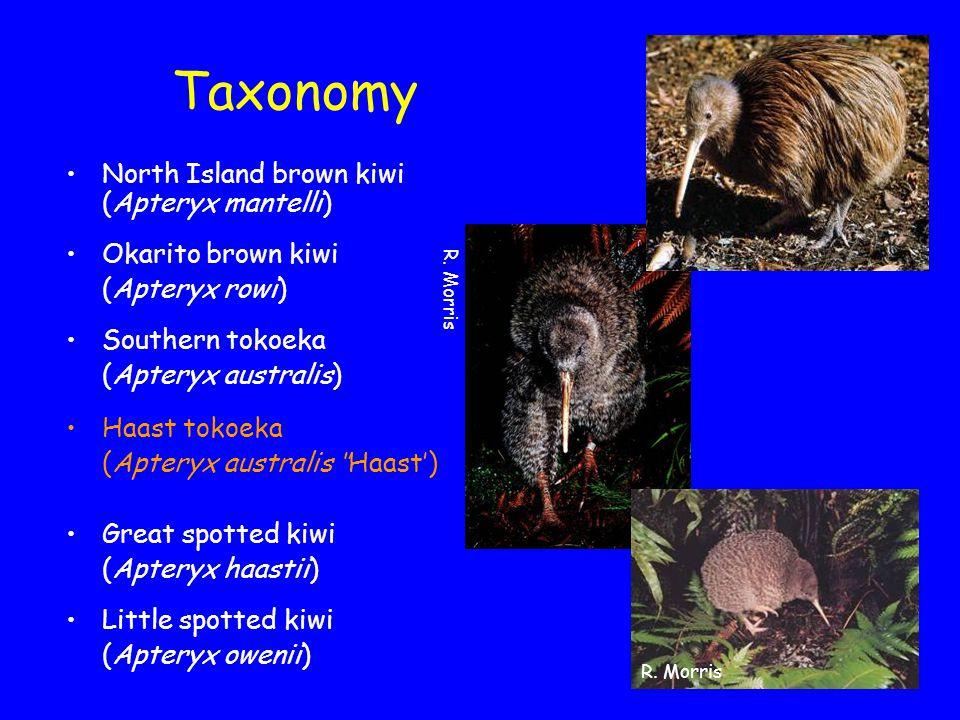 Kiwi abundance & distribution Department of Conservation North Island brown kiwi (25,000) Great spotted kiwi (17,000) Okarito brown kiwi (250) Southern tokoeka (15,000) Haast tokoeka (300) Little spotted kiwi (1,500)