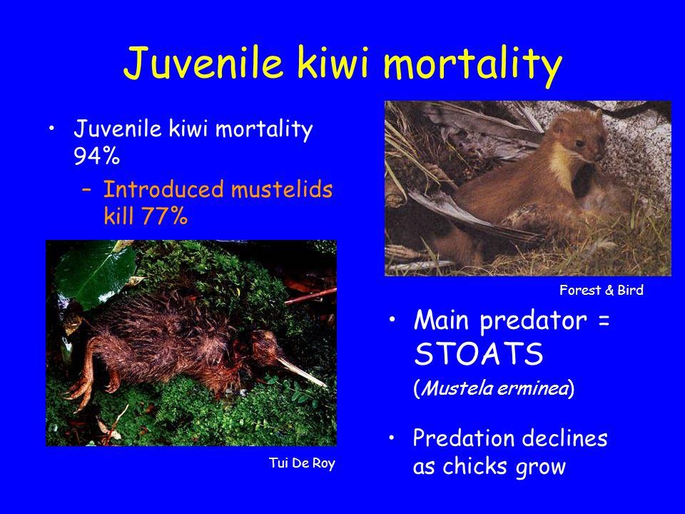 Juvenile kiwi mortality Juvenile kiwi mortality 94% –Introduced mustelids kill 77% Main predator = STOATS (Mustela erminea) Predation declines as chicks grow Forest & Bird Tui De Roy