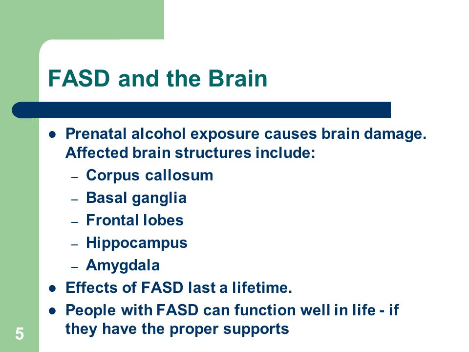 5 FASD and the Brain Prenatal alcohol exposure causes brain damage.