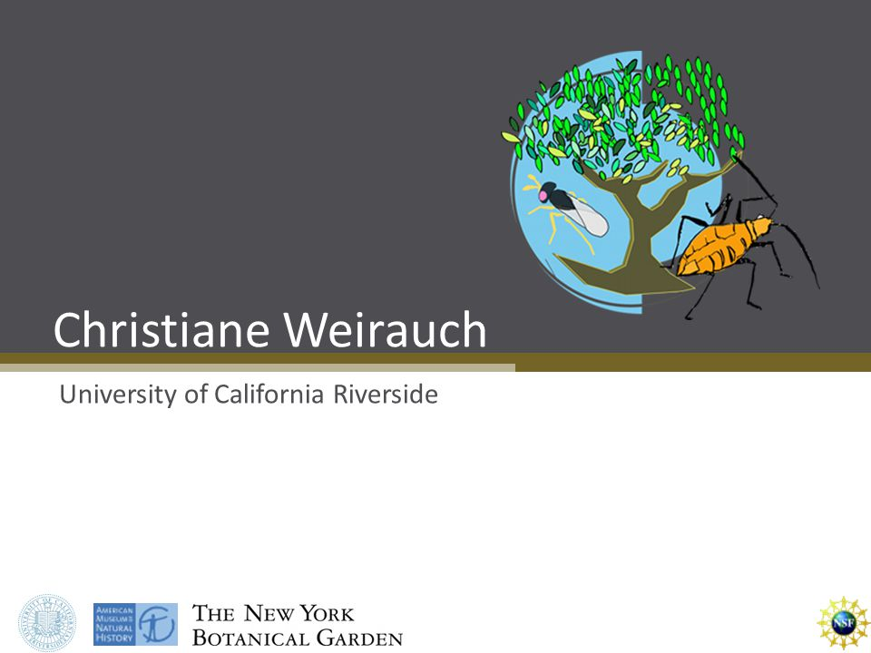 Christiane Weirauch University of California Riverside