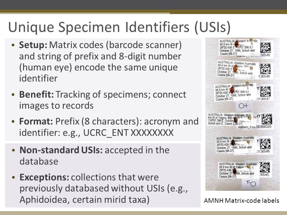 Unique Specimen Identifiers (USIs) AMNH Matrix-code labels Setup: Matrix codes (barcode scanner) and string of prefix and 8-digit number (human eye) e