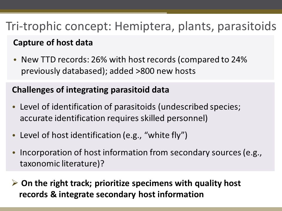 Tri-trophic concept: Hemiptera, plants, parasitoids Capture of host data New TTD records: 26% with host records (compared to 24% previously databased)