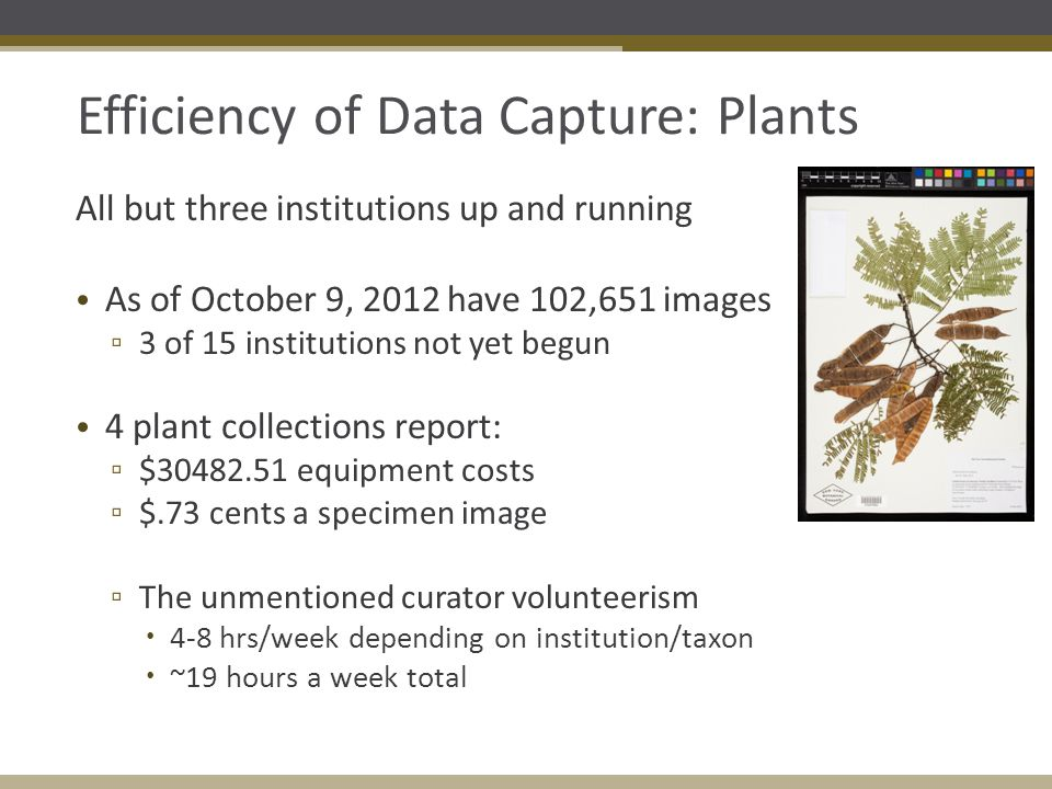 Efficiency of Data Capture: Plants All but three institutions up and running As of October 9, 2012 have 102,651 images ▫ 3 of 15 institutions not yet begun 4 plant collections report: ▫ $30482.51 equipment costs ▫ $.73 cents a specimen image ▫ The unmentioned curator volunteerism  4-8 hrs/week depending on institution/taxon  ~19 hours a week total