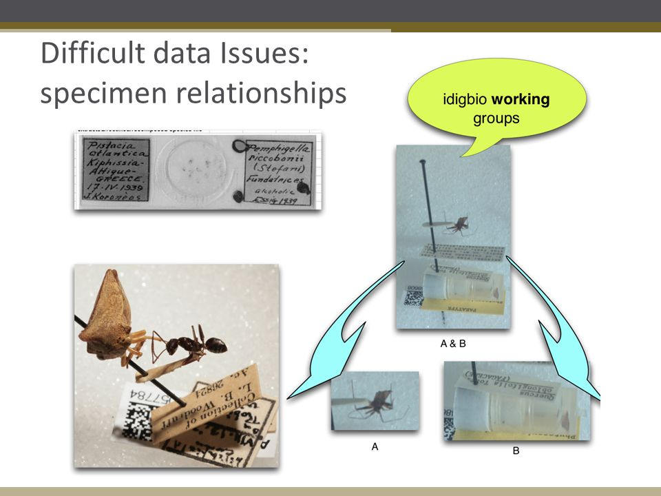 Difficult data Issues: specimen relationships