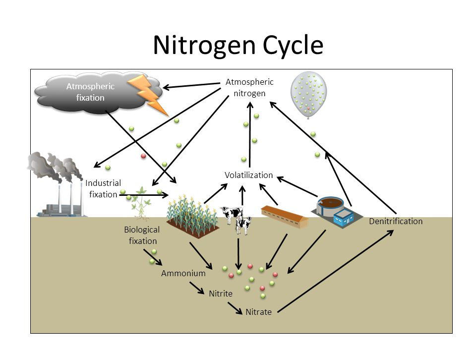 Nitrogen Cycle Atmospheric nitrogen Atmospheric fixation Denitrification Ammonium Nitrite Nitrate Volatilization Industrial fixation Biological fixation