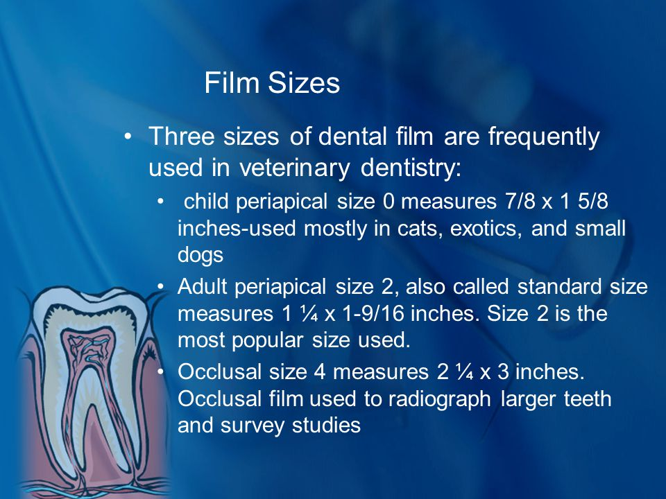 Film Sizes Three sizes of dental film are frequently used in veterinary dentistry: child periapical size 0 measures 7/8 x 1 5/8 inches-used mostly in