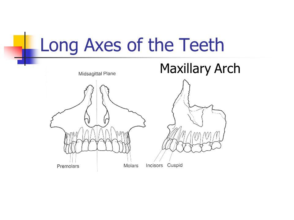 Long Axes of the Teeth Maxillary Arch