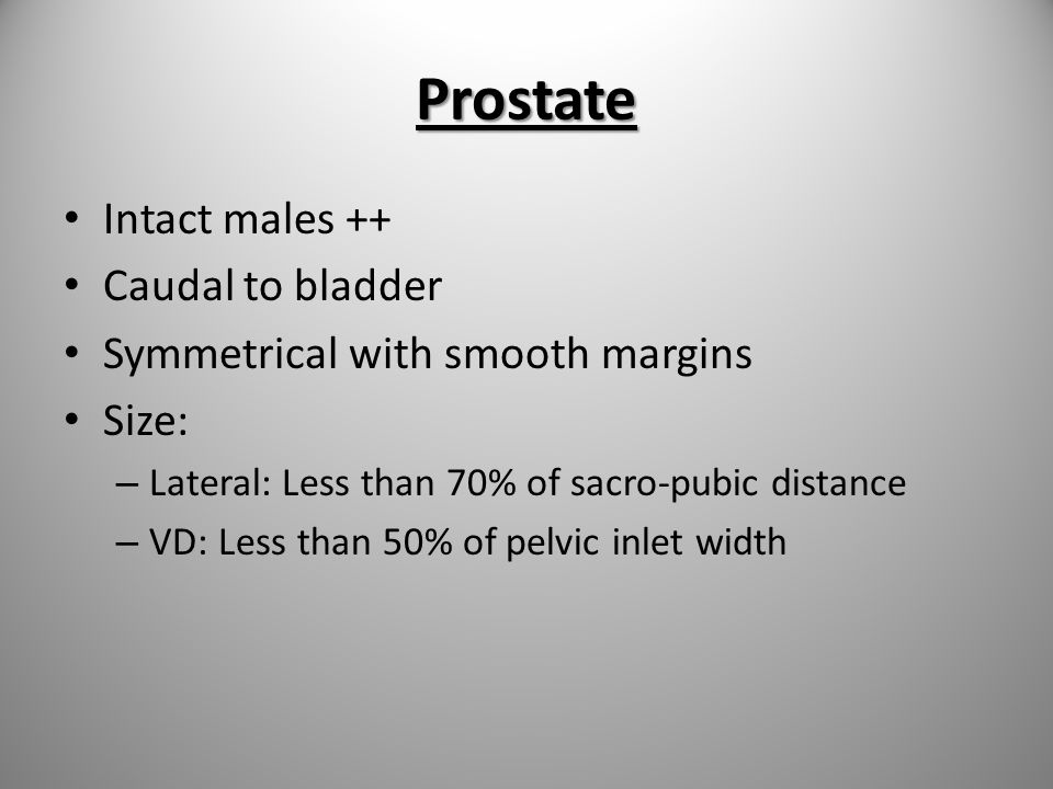 Prostate Intact males ++ Caudal to bladder Symmetrical with smooth margins Size: – Lateral: Less than 70% of sacro-pubic distance – VD: Less than 50%