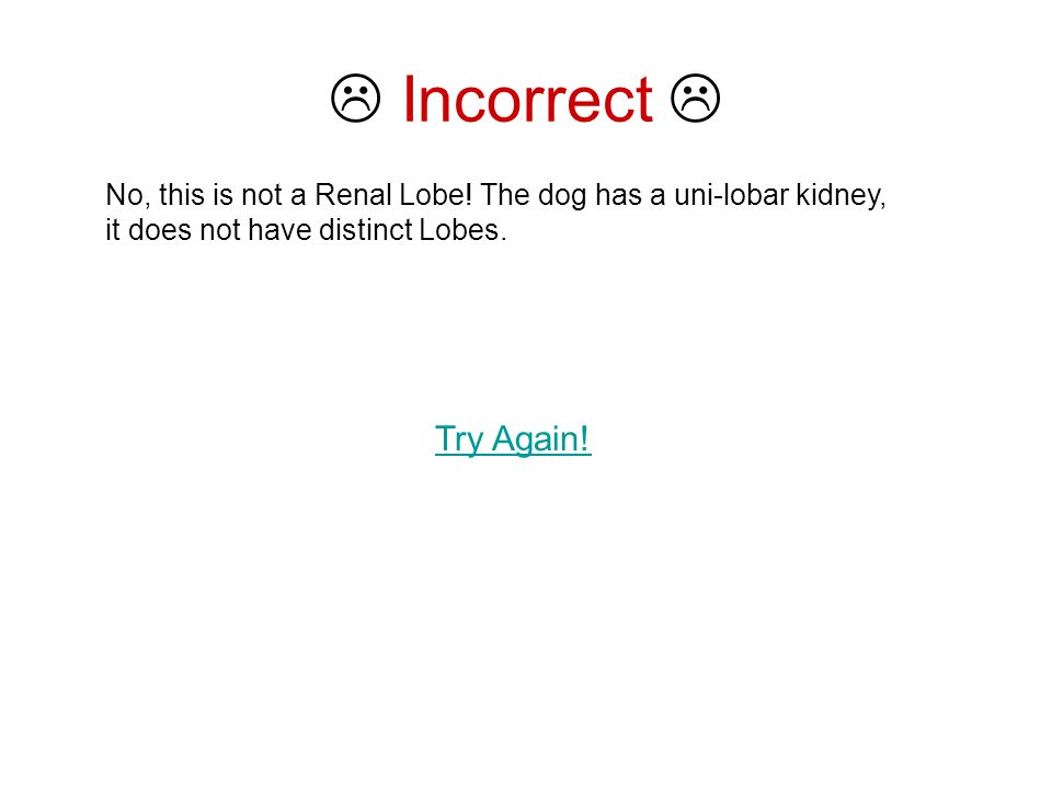  Incorrect  No, this is not a Renal Lobe.