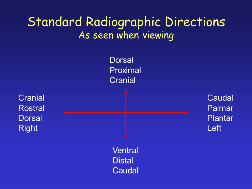 Standard Radiographic Directions As seen when viewing Dorsal Proximal Cranial Ventral Distal Caudal Cranial Rostral Dorsal Right Caudal Palmar Plantar Left
