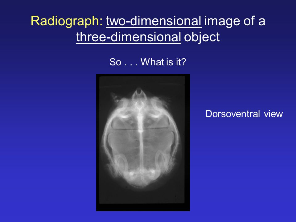Dorsoventral view Radiograph: two-dimensional image of a three-dimensional object So... What is it?