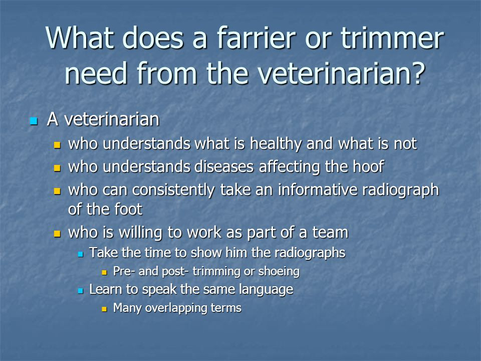 What does a farrier or trimmer need from the veterinarian? A veterinarian A veterinarian who understands what is healthy and what is not who understan