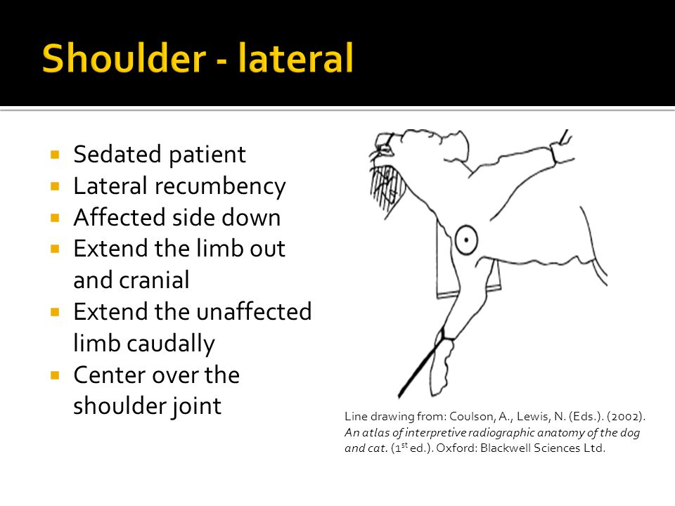 Sedated patient  Lateral recumbency  Affected side down  Extend the limb out and cranial  Extend the unaffected limb caudally  Center over the shoulder joint Line drawing from: Coulson, A., Lewis, N.