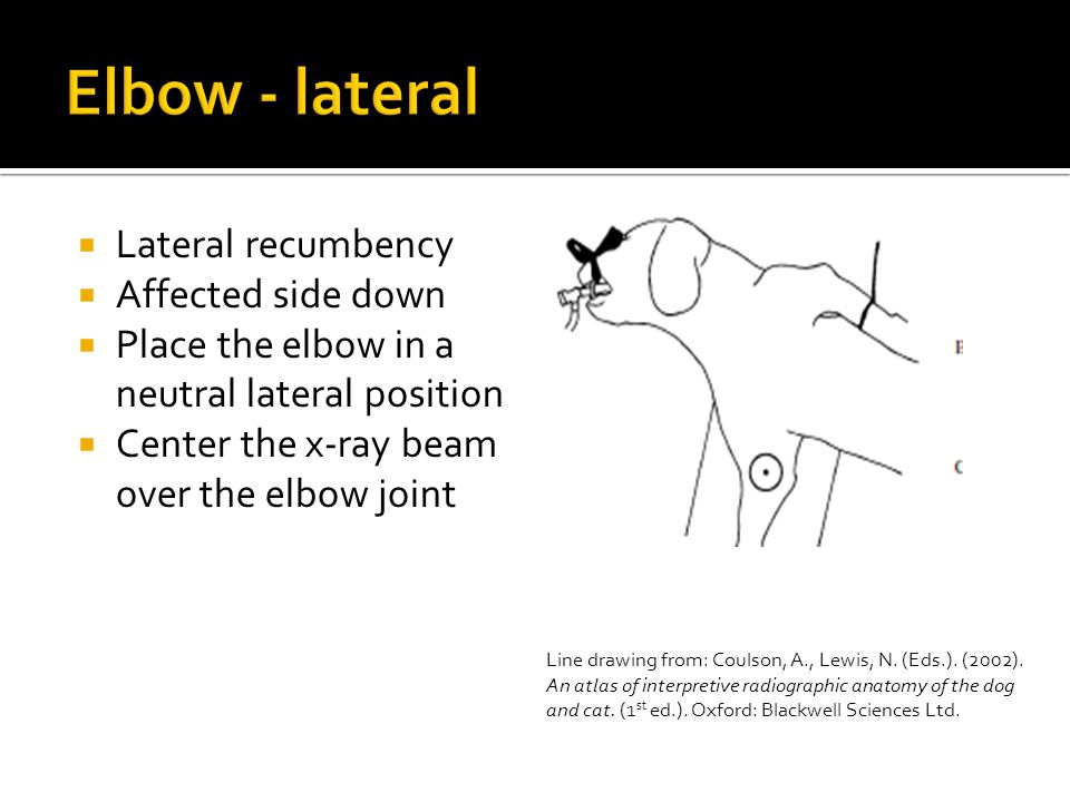  Lateral recumbency  Affected side down  Place the elbow in a neutral lateral position  Center the x-ray beam over the elbow joint Line drawing from: Coulson, A., Lewis, N.