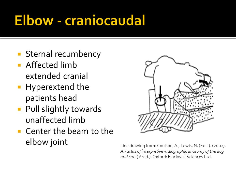  Sternal recumbency  Affected limb extended cranial  Hyperextend the patients head  Pull slightly towards unaffected limb  Center the beam to the elbow joint Line drawing from: Coulson, A., Lewis, N.
