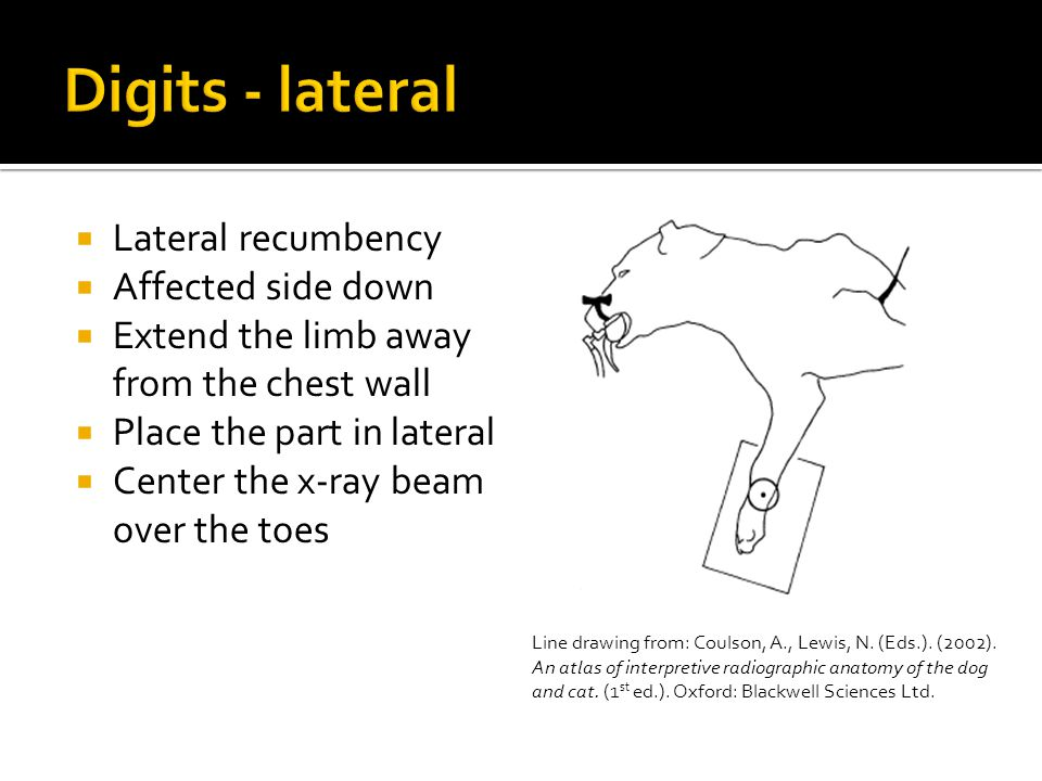  Lateral recumbency  Affected side down  Extend the limb away from the chest wall  Place the part in lateral  Center the x-ray beam over the toes
