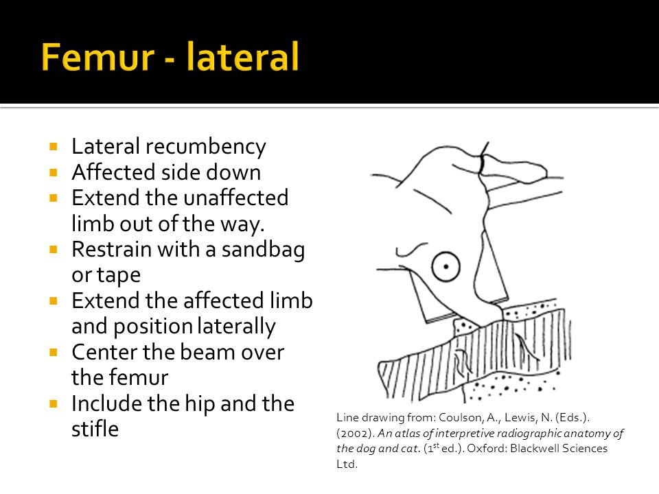  Lateral recumbency  Affected side down  Extend the unaffected limb out of the way.  Restrain with a sandbag or tape  Extend the affected limb an