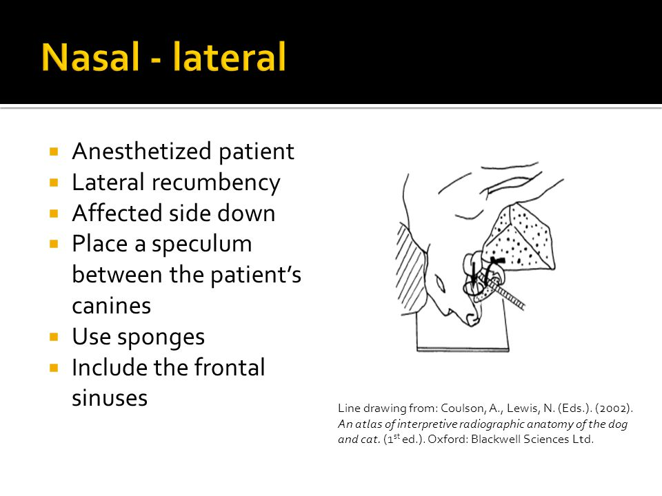  Anesthetized patient  Lateral recumbency  Affected side down  Place a speculum between the patient's canines  Use sponges  Include the frontal sinuses Line drawing from: Coulson, A., Lewis, N.