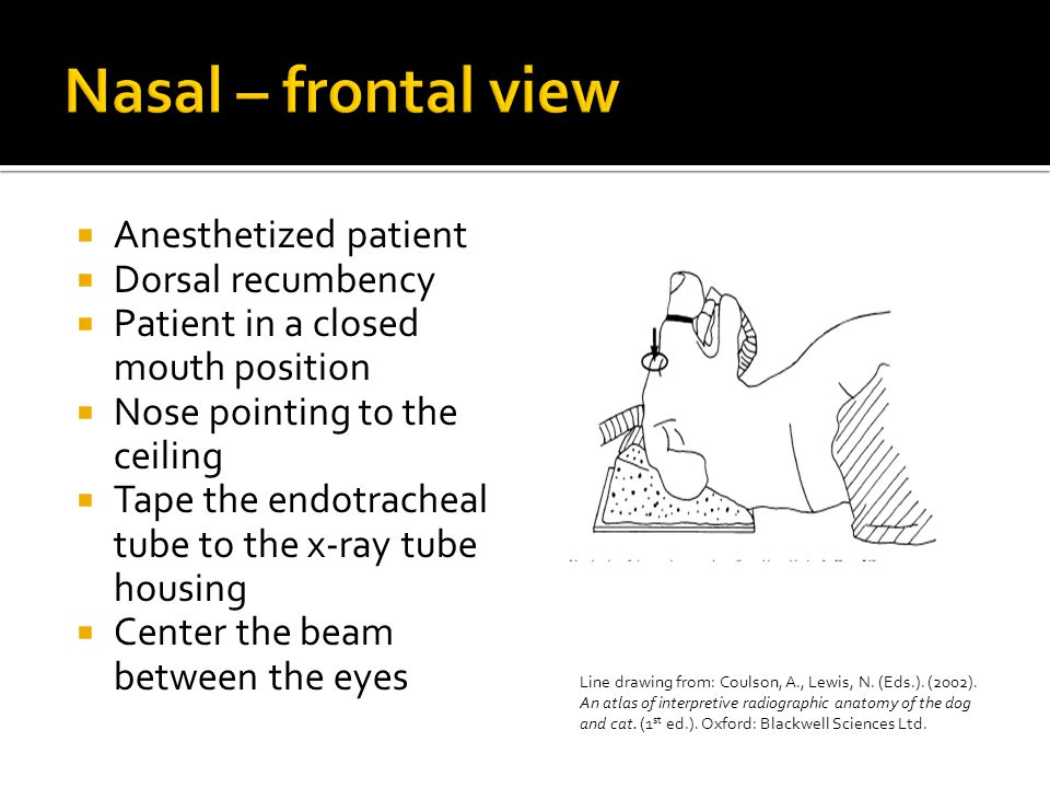  Anesthetized patient  Dorsal recumbency  Patient in a closed mouth position  Nose pointing to the ceiling  Tape the endotracheal tube to the x-ray tube housing  Center the beam between the eyes Line drawing from: Coulson, A., Lewis, N.
