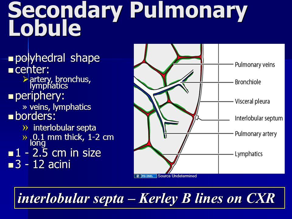 Secondary Pulmonary Lobule polyhedral shape polyhedral shape center: center:  artery, bronchus, lymphatics periphery: periphery: »veins, lymphatics b